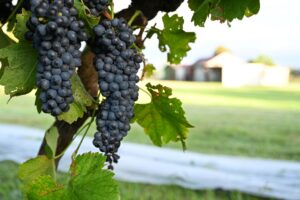 deCapel Wines